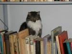 Juri kontrolliert die Bücher