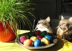 Webkater mit Katzengras