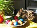Webkater erkennen Ostern