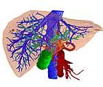 Dreidimensionale Darstellung einer Leber