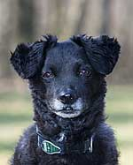 Hund von Bundesverband für Tiergesundheit