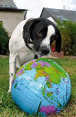 Ein Hund mit Weltkugel zum Welthundetag