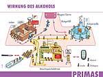 Erklärungsmodell zur Wirkung des Alkohols