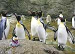Pinguin-Maskottchen besucht lebende Pinguine im Zoo