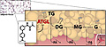 Das Molekül Atglistatin