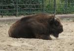 Tier aus dem Zoo Berlin