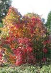 Herbstlicher Busch