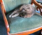 Dimi schläft auf einem Stuhl