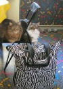 Webkater mit Trolley