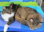Kater Juri und Dimi entspannen