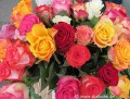 Rosen für Verliebte