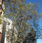 Baum mit Blättern