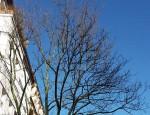 kahler Baum