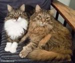 Webkater des Diabetes-Portals DiabSite zum Weltkatzentag