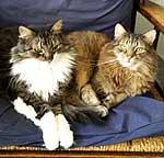 Webkater Juri und Dimi