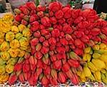 Tulpen auf Berliner Markt