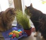 Kater lieben Katzengras