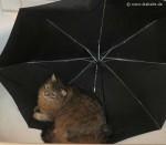 Webkater Dimi unter Schirm