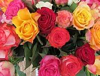 Rosen zum Valentinstag
