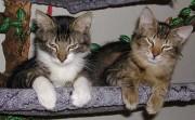 Katzen in der Schlafmulde