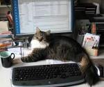 Juri auf dem Schreibtisch