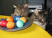 Webkater zu Ostern